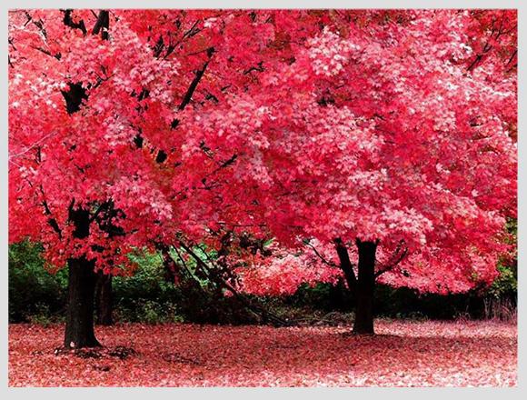 بالصور مناظر طبيعية من العالم , اروع صور لجمال الطبيعه 2772 10