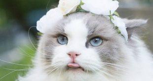صوره صور قطط كيوت , اجمل القطط و الطفها
