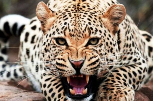 صوره صور حيوانات , اجمل صور لحيوانات