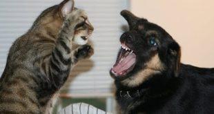 بالصور قطط وكلاب , صور جميلة لقط وكلب 454 12 310x165