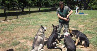 صوره كيفية تدريب الكلاب , طرق تعليم تنفيذ الاوامر للحيوان