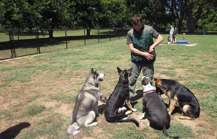 صور كيفية تدريب الكلاب , طرق تعليم تنفيذ الاوامر للحيوان