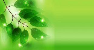 صور خلفية خضراء , بوستات تعبر عن الحياة