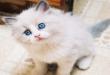 بالصور قطط شيرازى , صور حيوانات اليفة حلوة 6171 2 110x75