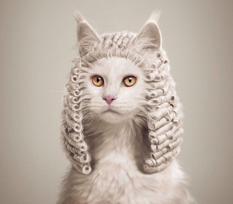 بالصور صور حيوانات مضحكة , اروع الصور المضحكة 798 7