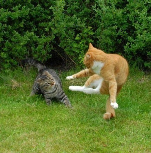 بالصور صور حيوانات مضحكة , اروع الصور المضحكة 798 8