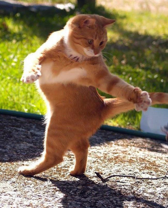 صوره صور حيوانات مضحكة , اروع الصور المضحكة