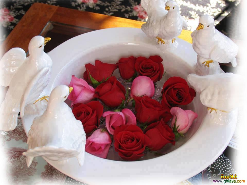 بالصور صور ورد جديد , تهادوا الورد ودا . 6323 6