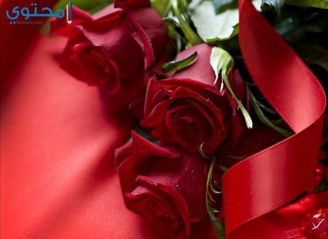 بالصور صور ورد جديد , تهادوا الورد ودا . 6323 8