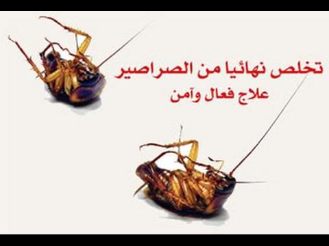 صوره القضاء على الصراصير , الصراصير هي العدو اللدود للمنازل .