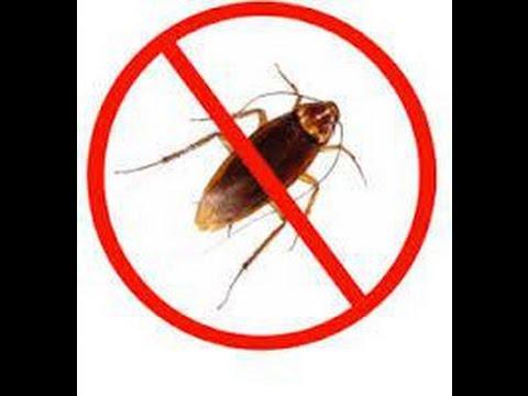 بالصور القضاء على الصراصير , الصراصير هي العدو اللدود للمنازل . 6333 2