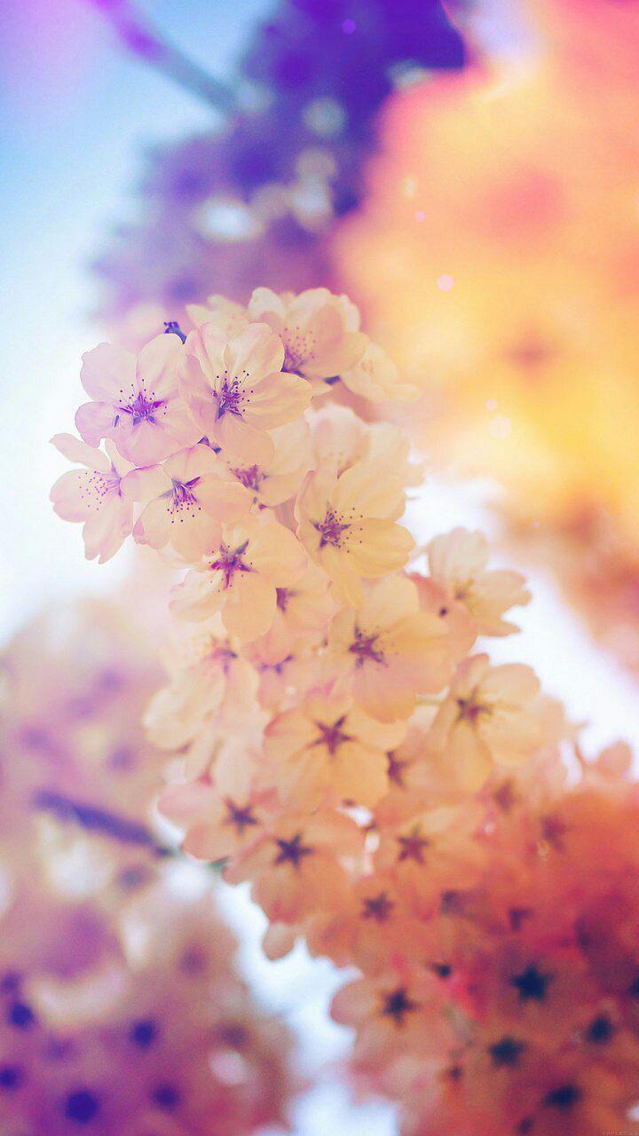 بالصور خلفيات جميله , ثمبات رائعة وجميلة لهاتفك او الحاسب الخاص بك 879 34