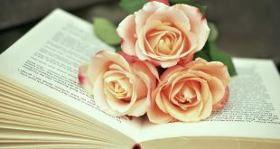 صوره صور ورد حلوه , احلى الورود واجملها بكل الالوان والاصناف