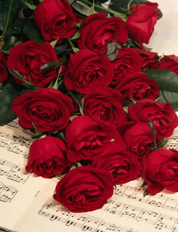 بالصور صور ورد حلوه , احلى الورود واجملها بكل الالوان والاصناف 972 2