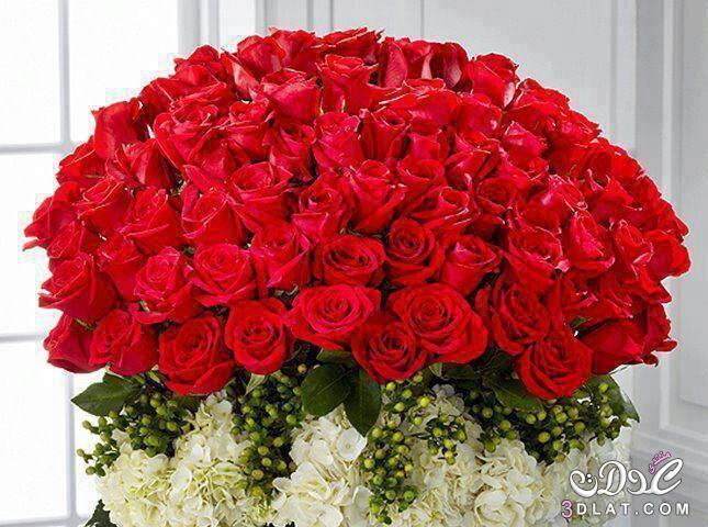 بالصور صور ورد حلوه , احلى الورود واجملها بكل الالوان والاصناف 972 9