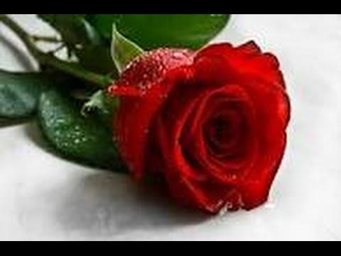 صور صور اجمل ورد , صورة ولا في الاحلام مع اجمل الورود