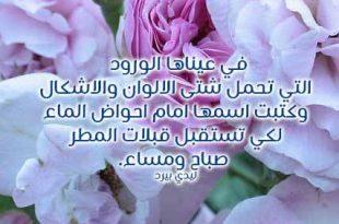 بالصور كلمات من ورود , عبارات فواحة تفوح باحلي كلام علي زهورر 1357 12 310x205