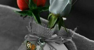 بالصور ورود رومانسية , هدايا رومانسية عاشقة من الورود الحالمة 3444 12 310x165