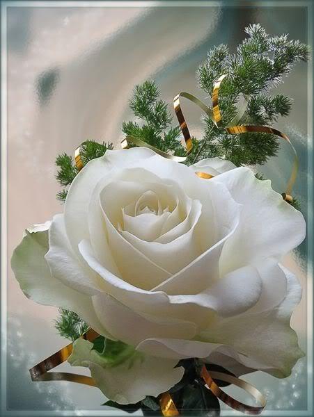 بالصور صور ورود جميلة , خلفيات رومانسية للعشاق بطعم الورد 3545 7