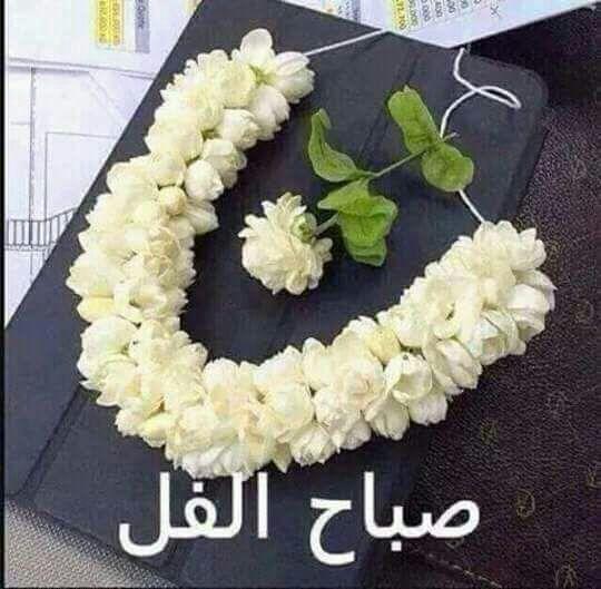 بالصور احلى صباح لاحلى ناس , لكل الاهل والاصحاب صباح حلوة عليكم 3614