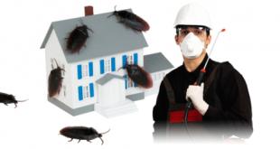 صور التخلص من الحشرات في المنزل , طرق التخلص من الحشرات