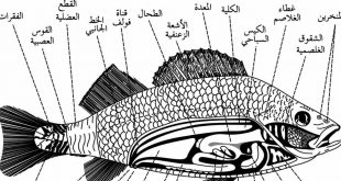 كيف يتنفس السمك , كيف يعيش السمك