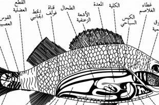 بالصور كيف يتنفس السمك , كيف يعيش السمك 12114 2 310x205