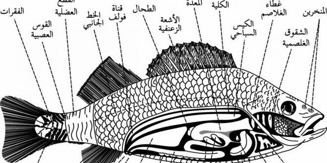 صور كيف يتنفس السمك , كيف يعيش السمك