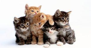 بالصور القطط في المنام , تفسير رؤية القطط فى الحلم 12732 3 310x165