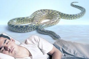 بالصور تفسير حلم الثعبان , رؤيه منام الثعبان 2979 2 310x205