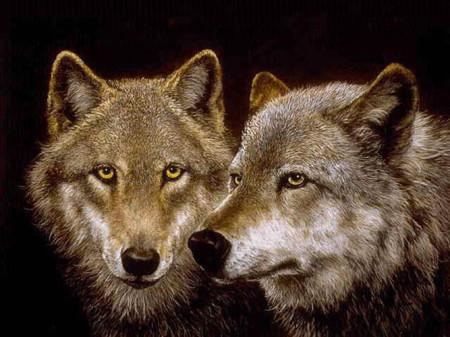 بالصور صور حيوانات حلوة , انواع الحيوانات المختلفة حول العالم 13010 10
