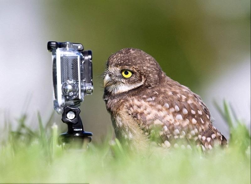 بالصور صور حيوانات حلوة , انواع الحيوانات المختلفة حول العالم 13010 12