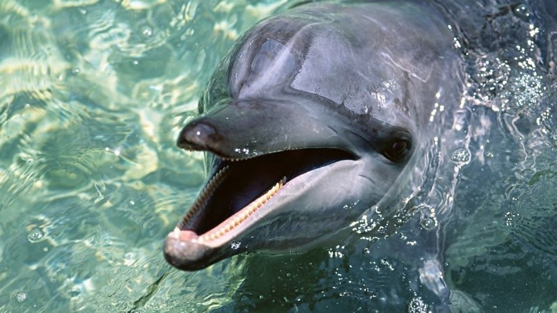 بالصور صور حيوانات حلوة , انواع الحيوانات المختلفة حول العالم 13010 13
