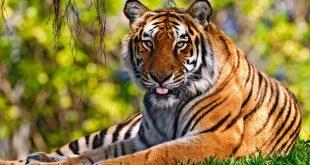 صور صور حيوانات حلوة , انواع الحيوانات المختلفة حول العالم