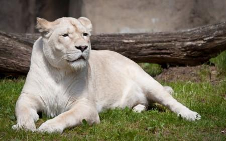 بالصور صور حيوانات حلوة , انواع الحيوانات المختلفة حول العالم 13010 2
