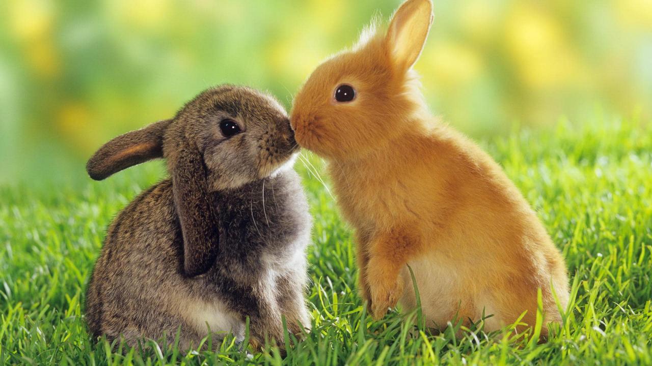بالصور صور حيوانات حلوة , انواع الحيوانات المختلفة حول العالم 13010 4