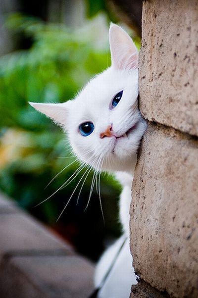 بالصور صور حيوانات حلوة , انواع الحيوانات المختلفة حول العالم 13010 5