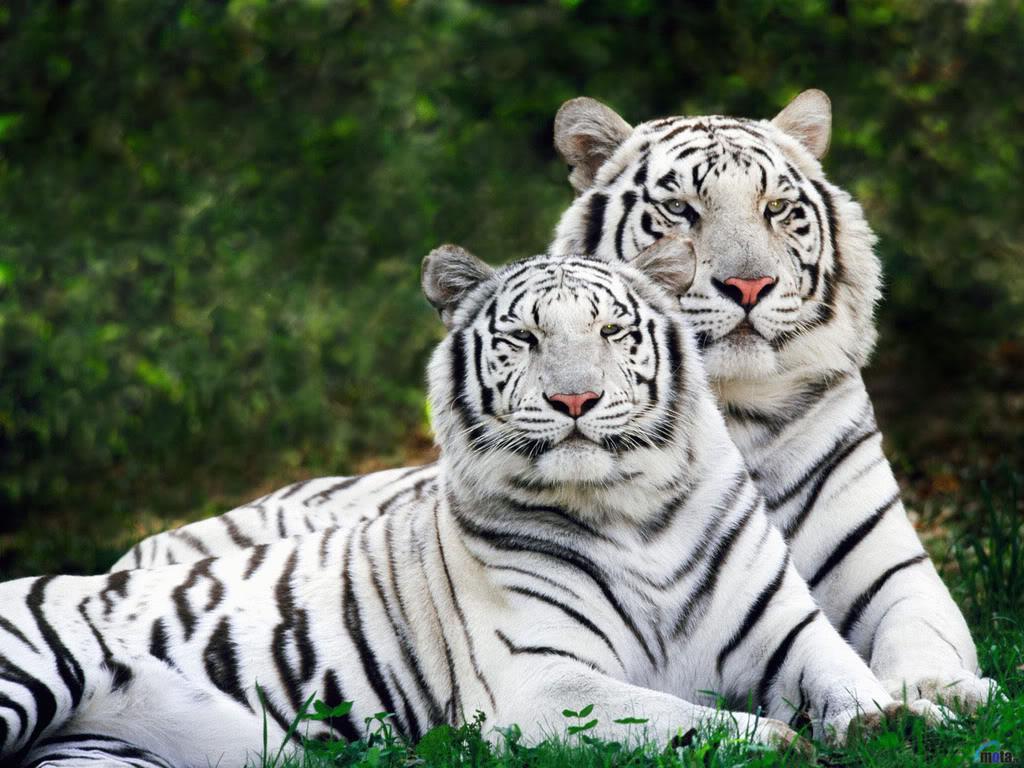 بالصور صور حيوانات حلوة , انواع الحيوانات المختلفة حول العالم 13010 6