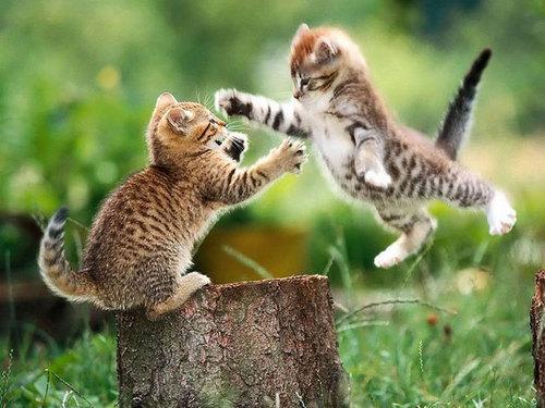 بالصور صور حيوانات حلوة , انواع الحيوانات المختلفة حول العالم 13010 7