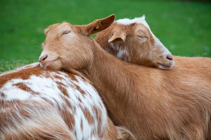 بالصور صور حيوانات حلوة , انواع الحيوانات المختلفة حول العالم 13010 9
