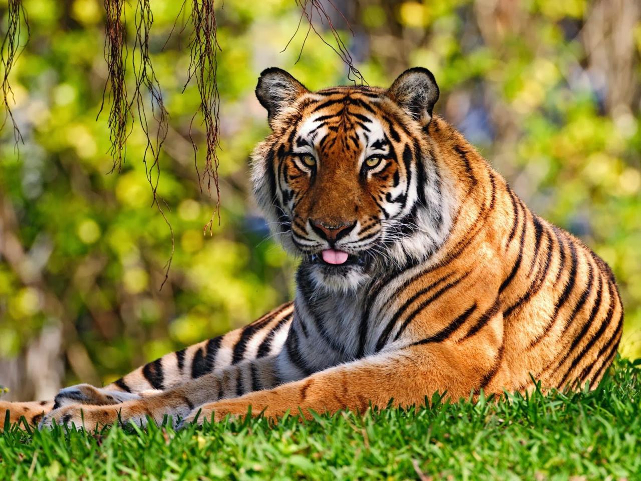 بالصور صور حيوانات حلوة , انواع الحيوانات المختلفة حول العالم 13010