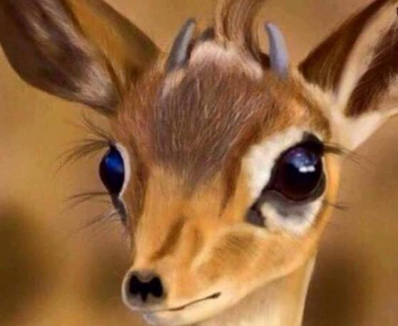 صورة عيون الريم , اشكال متنوعه لعيون الريم