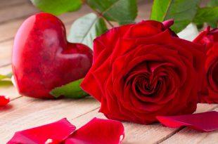 صور صور اجمل الورود , صور ورود رائعه لم تشاهدوها من قبل