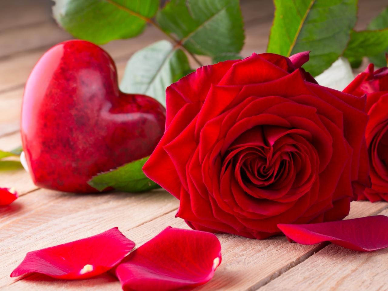 صورة صور اجمل الورود , صور ورود رائعه لم تشاهدوها من قبل