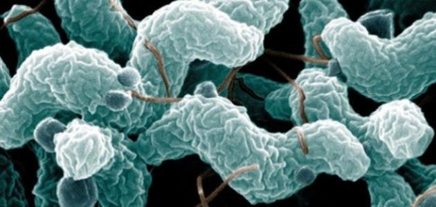 صورة مرض التيفوئيد , ماهو مرض التيفوئيد بالتفصيل