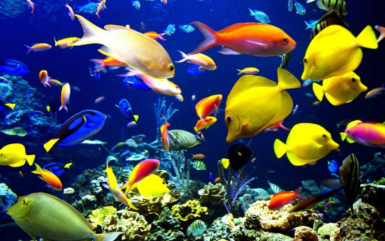 صور معلومات عن الاسماك.معلومات هامه عن الاسماك