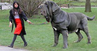 صورة صور لانواع الكلاب , شاهد جميع انواع الكلاب في العالم