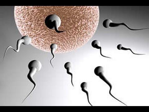 صورة افضل وضعية للحمل , احسن اوضاع حميميه لحدوث حمل سريعا