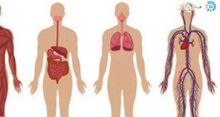 صور جسم الانسان بالصور , تعرف على معلومات عن جسم الانسان
