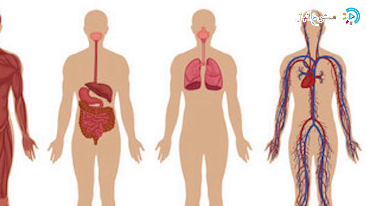 صورة جسم الانسان بالصور , تعرف على معلومات عن جسم الانسان
